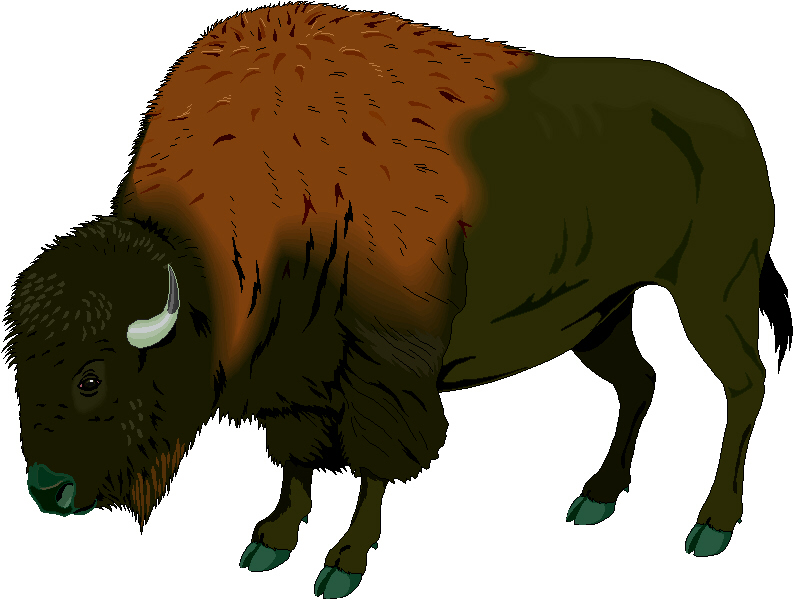 Running Buffalo Clipart Art Buffalo  search Buffalo