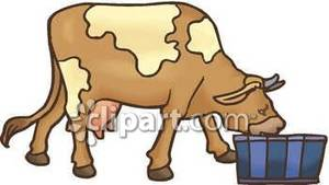 Animal clipart drink water Cow Free Taking Free Drink