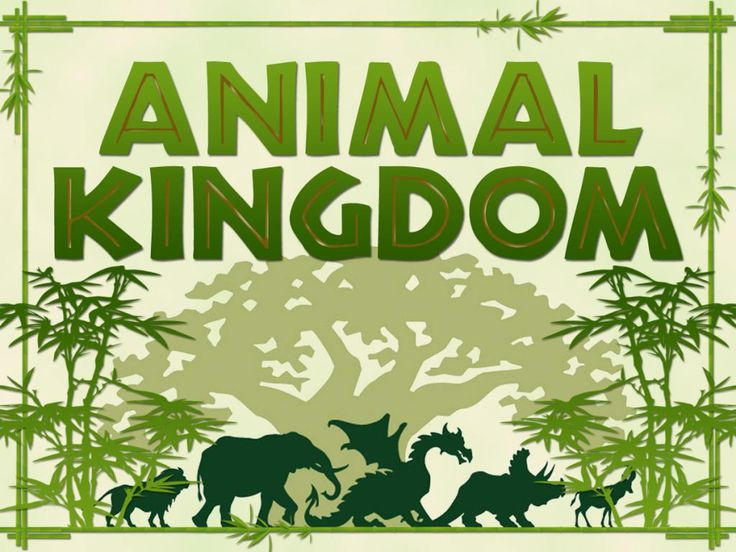 Animal Kingdom clipart #10