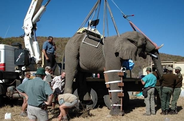 Animal Kingdom clipart animal care Elephant Control via the for
