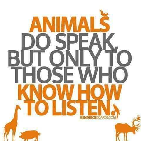Animal Kingdom clipart animal care Have 134 the know images