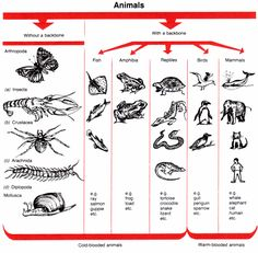 Animal Kingdom clipart cute The chart Animal Yes (see