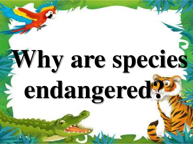 Animal Kingdom clipart endangered animal Animals endangered? Endangered species Why