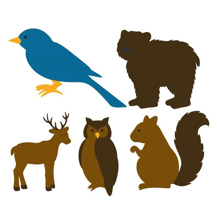 Animal Kingdom clipart fauna Kingdom & Templates Art Templates