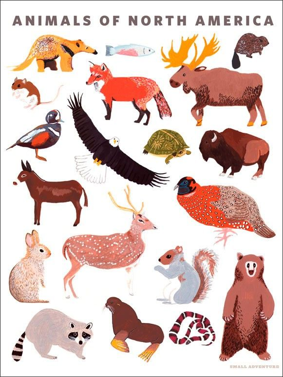 Animal Kingdom clipart fauna Images Stick Oopsy Posters 58