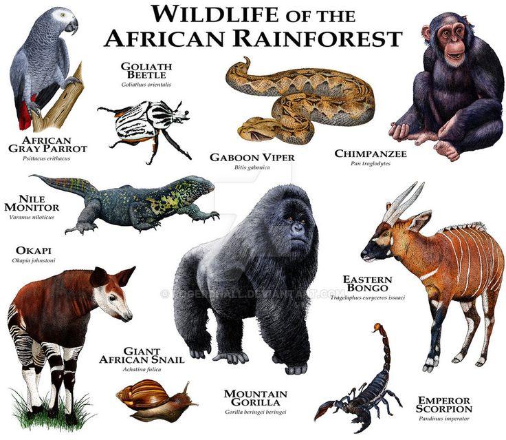 Animal Kingdom clipart native african Valley native Fine unique Orinoco