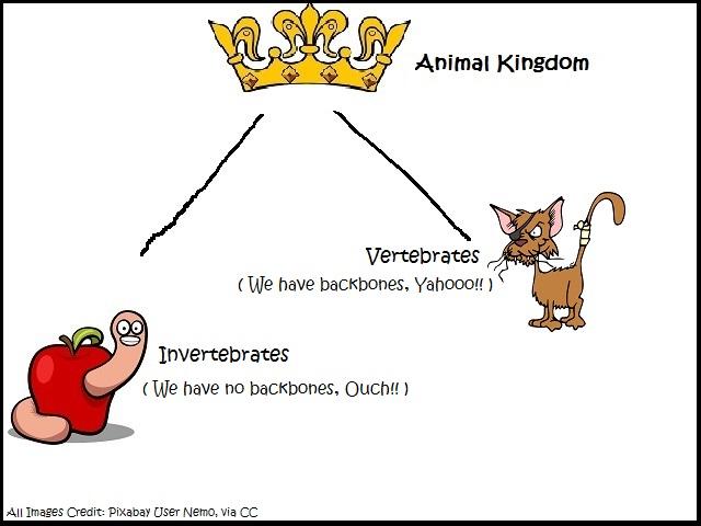 Animal Kingdom clipart vertebrate Wild For Now Facts Kingdom