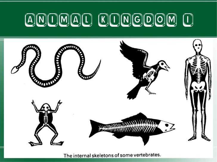 Animal Kingdom clipart fauna 1 ANIMAL Animal KINGDOM kingdom