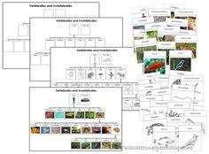 Animal Kingdom clipart vertebrate Vertebrates Photographic Vertebrates Charts: Animals