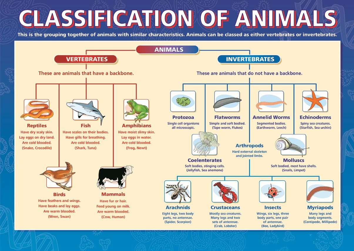Animal Kingdom clipart vertebrate Vertebrates the Science Investigate Vertebrates