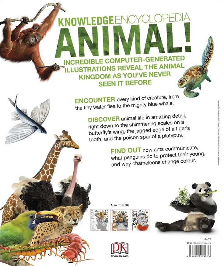 Animal Kingdom clipart vertebrate Large are Most animals about