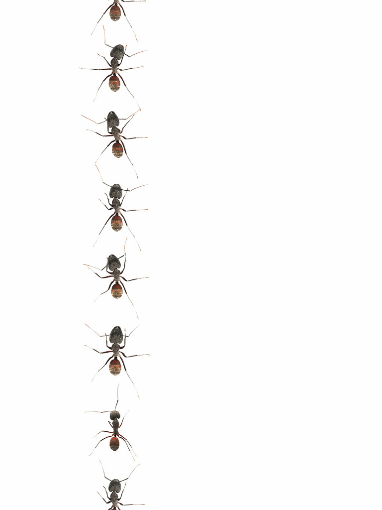 Ant clipart ant trail Cliparts Animated Clipart Cliparts Marching