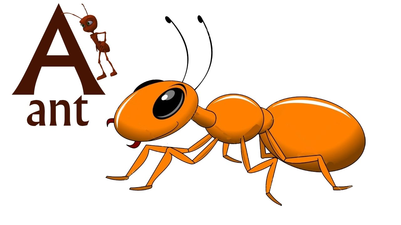 Ant clipart baby Songs Songs English For Baby