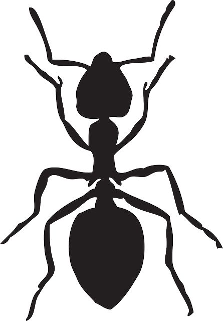 Drawn bug ant Pixabay Best on Insect on