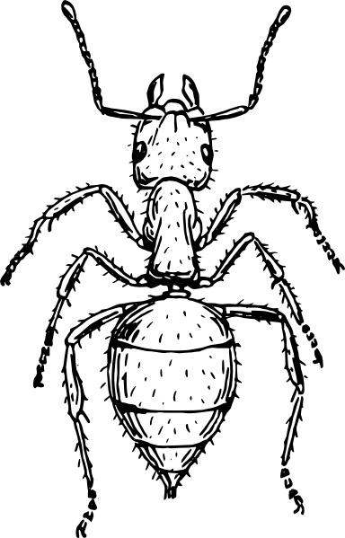Ant clipart invertebrate Art clip art svg