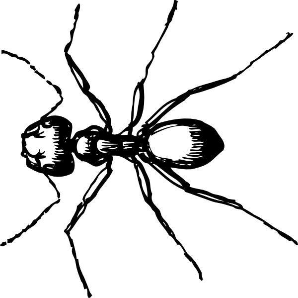 Ant clipart invertebrate Ant Ant clip svg
