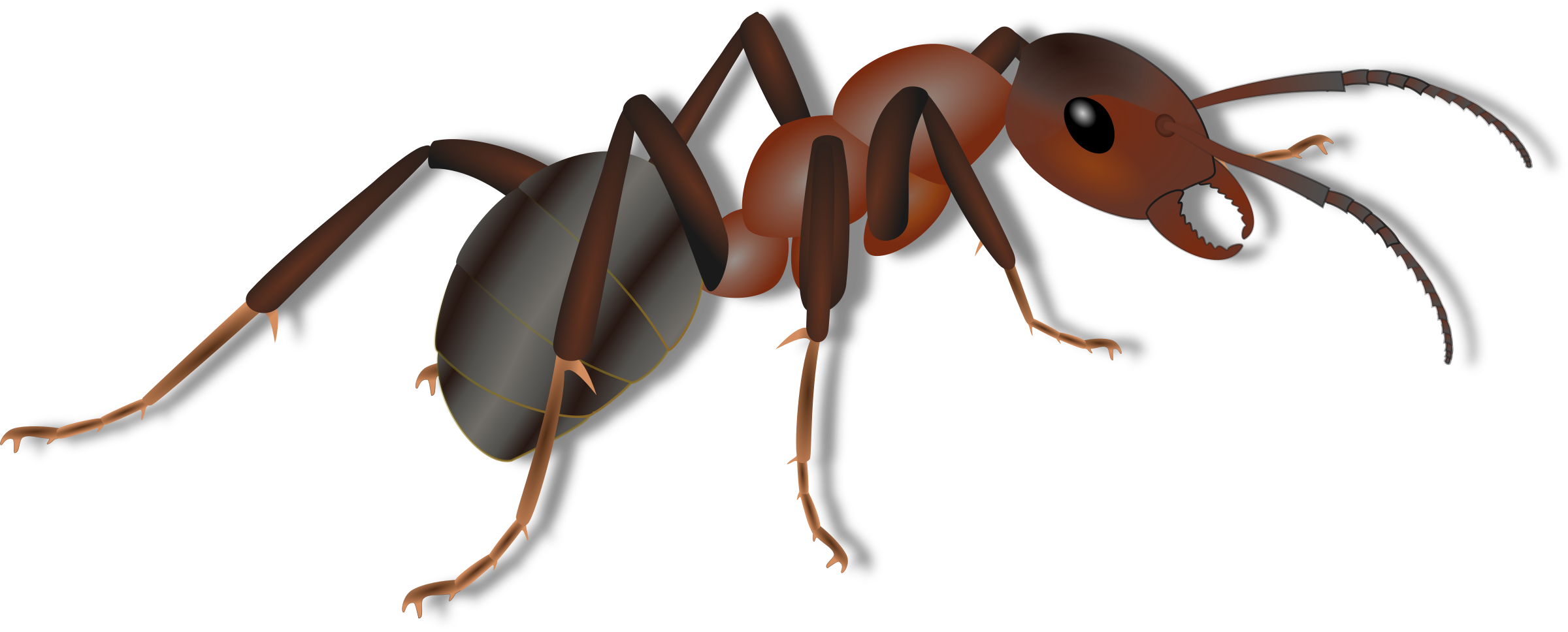 Ant clipart invertebrate Ameise Clipart Ameise Ant Ant