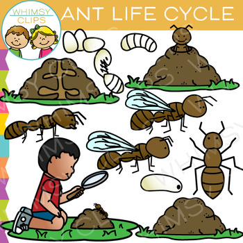 Ant clipart whimsical Art Life Cycle Clip Cycle