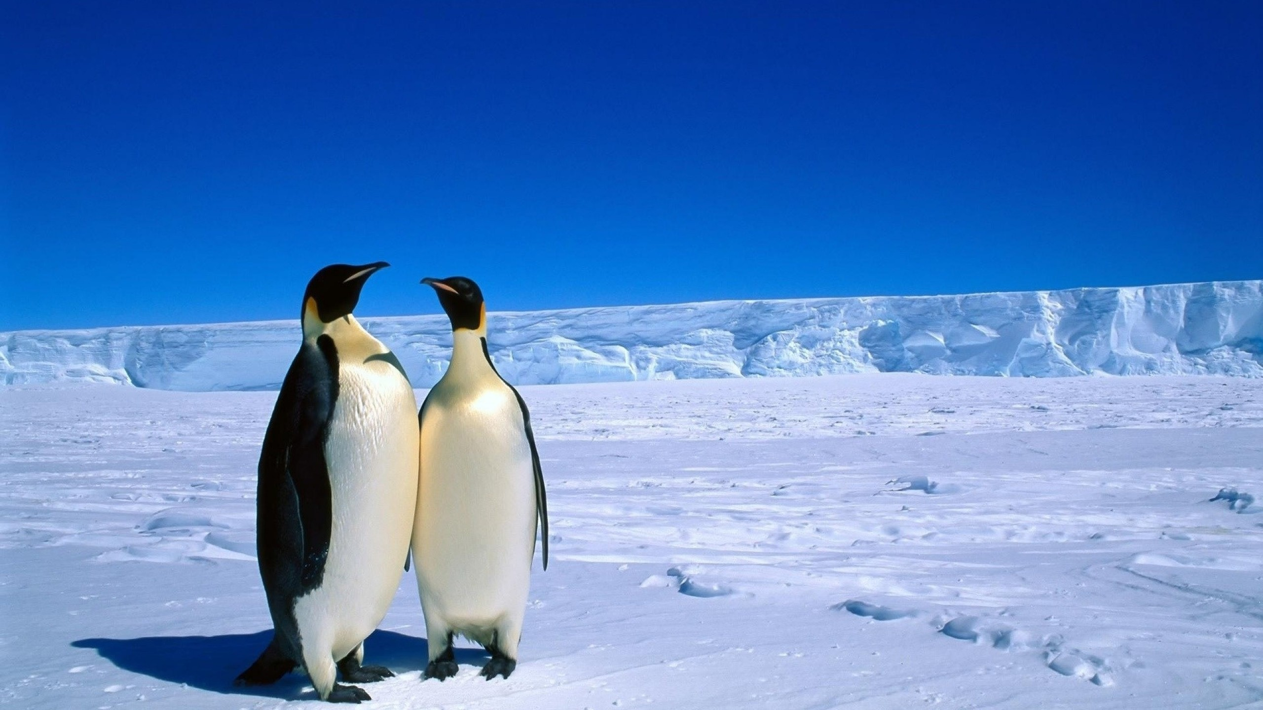 Antarctica clipart Antarctica Clipart in – Penguins