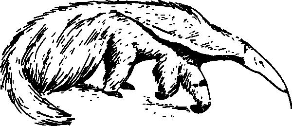 Anteater clipart Clip  Anteater Clker vector