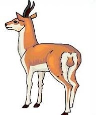 Antelope clipart Free Antelope Clipart Antelope