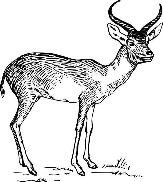 Antelope clipart cartoon Media Free Antelope vector free