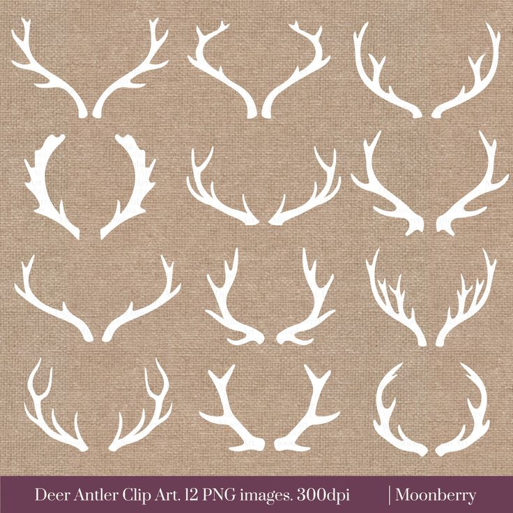 Single clipart cranberry 20+ on Antler ideas tattoos