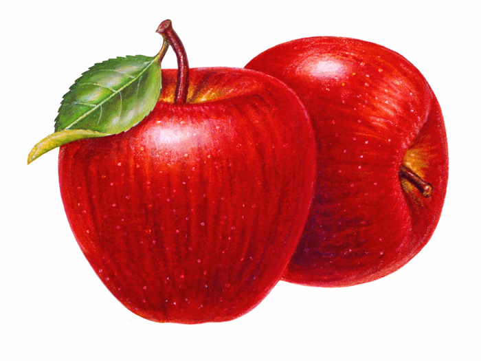 Apple clipart realistic ILLUSTRATING 5 MY LIFE DAY