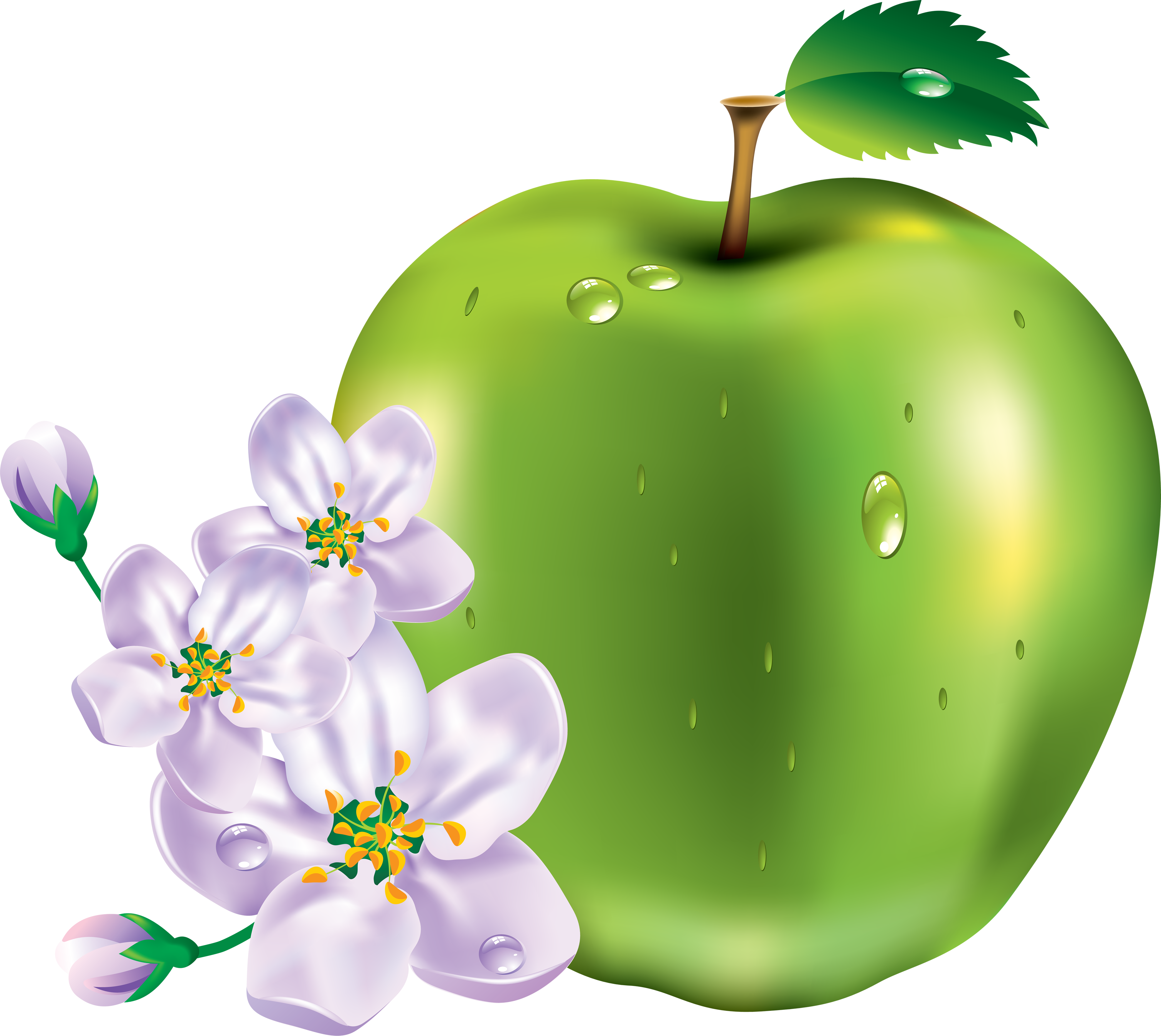 Apple clipart seven Isolated com noBACKS Apple by