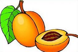 Apricot clipart Apricot Clipart Free Apricot