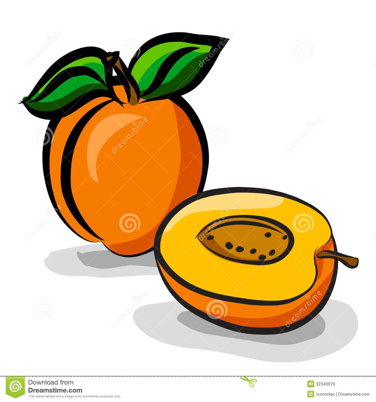 Apricot clipart Free Clipart Clipart Apricot Images