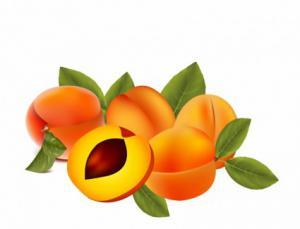 Apricot clipart Download Apricot Clip Clipart Art