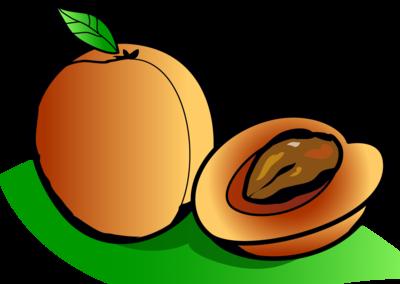 Apricot clipart cartoon Christart Art Apricot Clip Clip