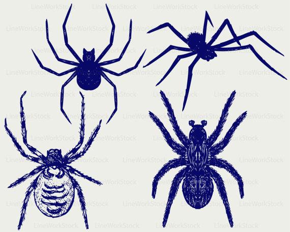 Arachnid clipart colorful Svg digital This Tarantula file