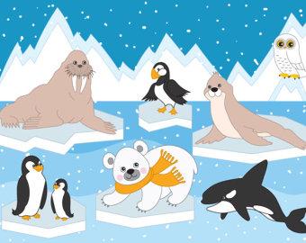 Arctic clipart Animals Winter Ice 70% Arctic