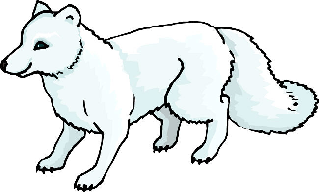 Polar Fox clipart #1