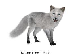 Arctic Fox clipart #10
