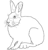 Arctic Hare clipart Printable Arctic Hares Pages Coloring