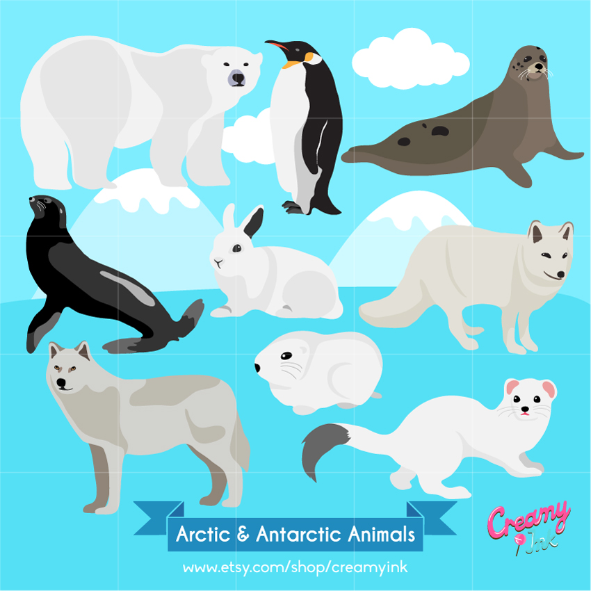Arctic Hare clipart arctic seal Instant art Clipart Illustration Arctic