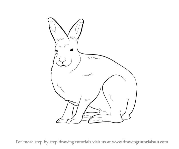 Arctic Hare clipart artic Hare (Antarctic by a Step