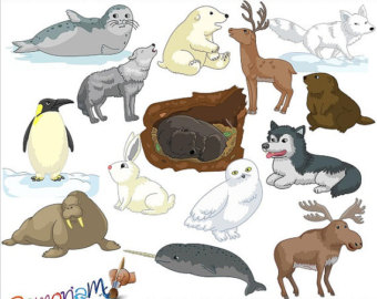 Arctic Hare clipart artic Etsy Clipart Animals Winter Artic