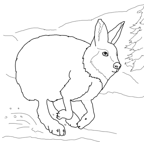 Arctic Hare clipart coloring Running Arctic page of Printable