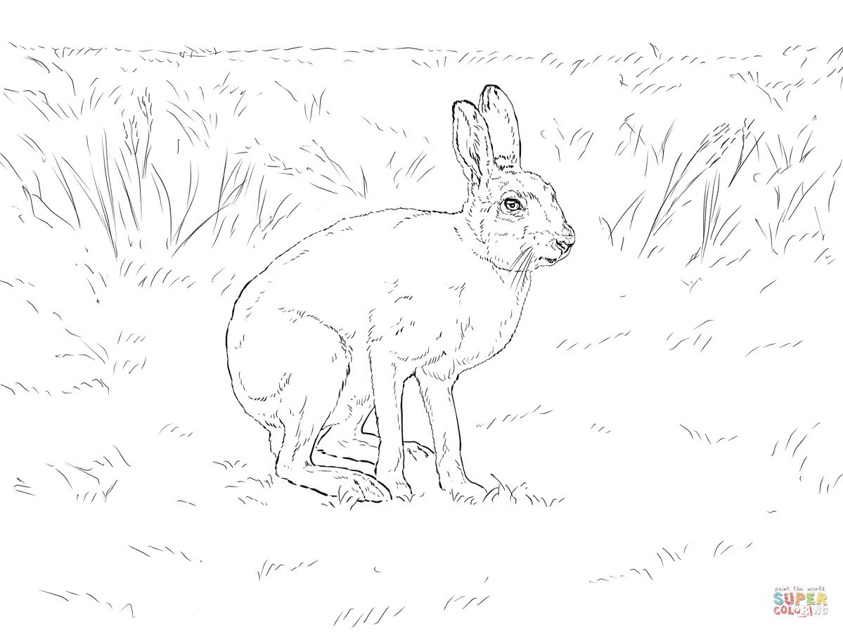 Arctic Hare clipart coloring Coloring Coloring Hare Printable Hare