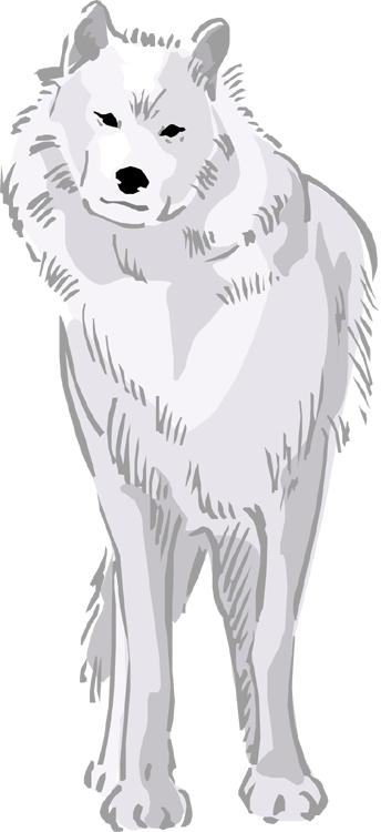 Arctic Wolf clipart Wolf Arctic Wolf Clipart Free