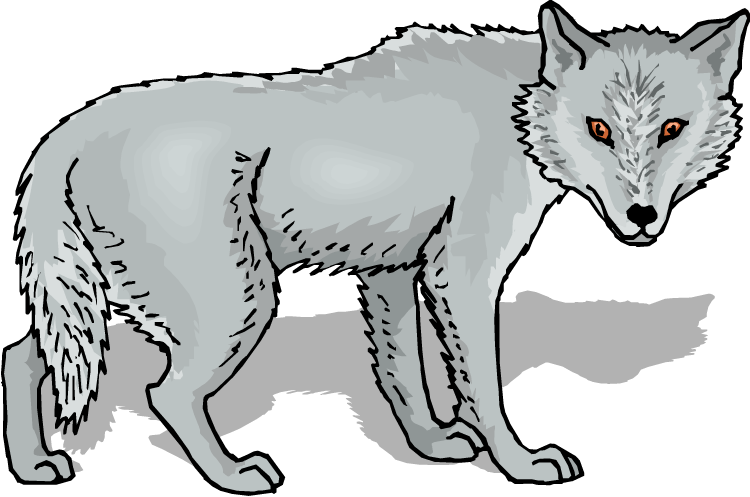 Arctic Wolf clipart Wolf Grey Wolf Clipart Free