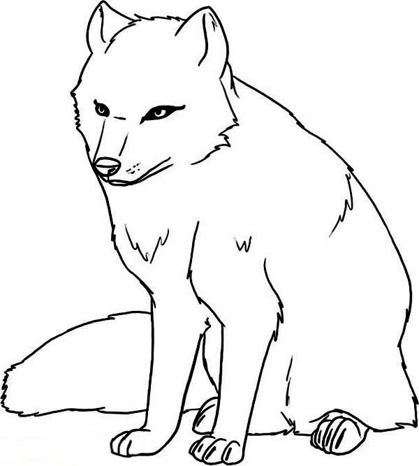 Arctic Wolf clipart Download collection clipart arctic Arctic