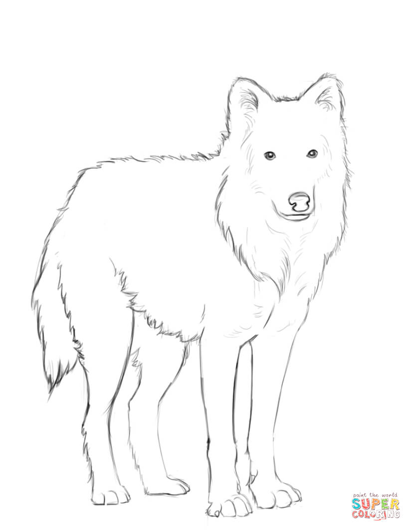 Arctic Wolf clipart Coloring Pages Arctic Coloring Wolf