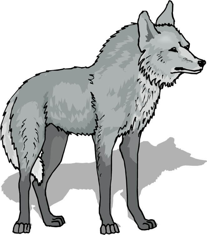 Arctic Wolf clipart Photo#10 Arctic Clipart wolf Arctic