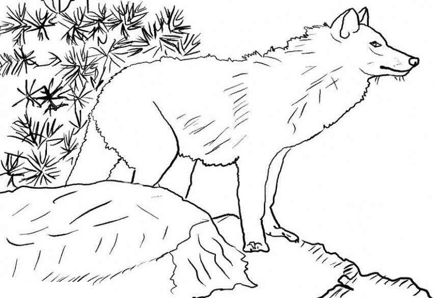 Arctic Wolf clipart outline howling #8 Arctic Download coloring coloring