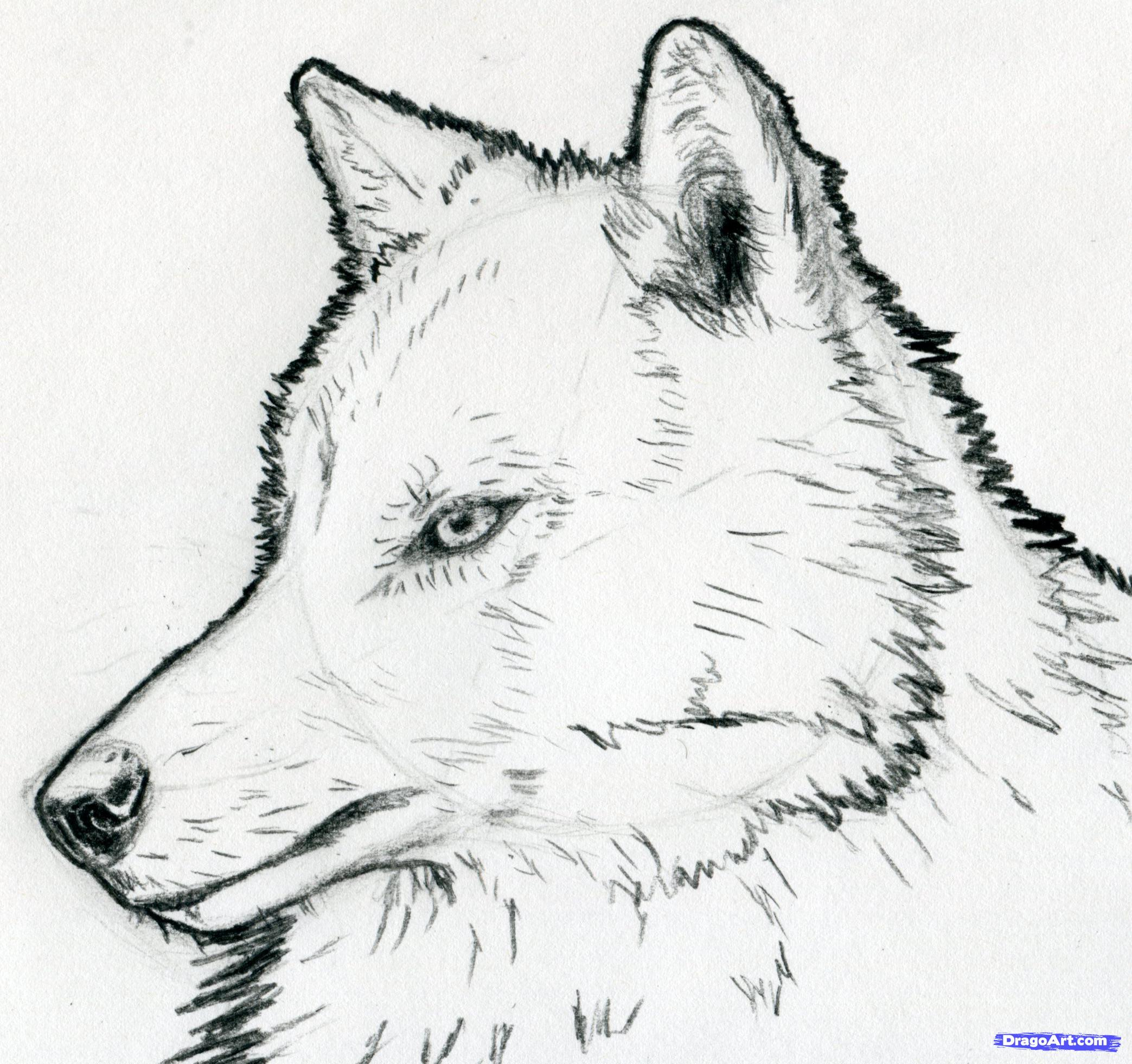 Arctic Wolf clipart simple Animals To Forest Wolf ALL